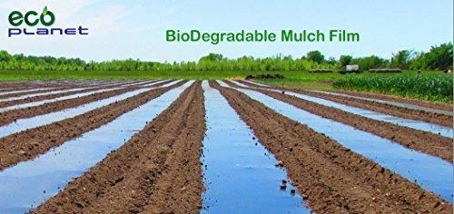 1 Mulch (EcoPlanet Bio-degradable Agricultural Plasticulture Black Plastic Mulch Film Gardening Farming Film (1 Mil, 3 feet x 50 feet) by EcoPlanet)