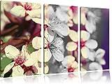 I fiori di ciliegio immagine stile retrò foto in bianco / nero 3 pezzi di tela 120x80 in su tela, XXL enormi immagini completamente Pagina con la barella, stampa d'arte sul murale con telaio, più economico di pittura o un dipinto a olio, non un manifesto o un banner,