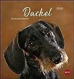 Dackel Postkartenkalender Kalender 2020
