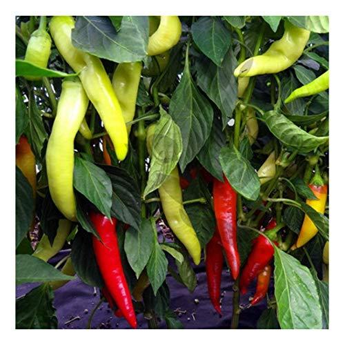 Süßes Chili zum Einlegen, Grillen, Frittieren - Sweet Banana - 20 Samen