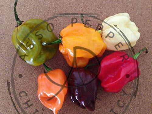 Samen Paket: Peperoncino 75 Semi Habanero Rot Orange okolade E White !!!