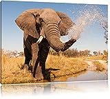 schöner Elefant spritzt mit Wasser, Format: 80x60 auf Leinwand, XXL riesige Bilder fertig gerahmt mit Keilrahmen, Kunstdruck auf Wandbild mit Rahmen, günstiger als Gemälde oder Ölbild, kein Poster oder Plakat