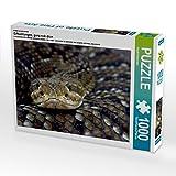 Ein Motiv aus dem Kalender Giftschlangen, ganz nah dran 1000 Teile Puzzle quer (CALVENDO Tiere)