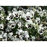 Amazon Fr Fleurs Comestibles Fleurs Graines Jardin