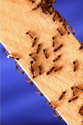 insect-journal-fire-ants-on-wood-entomology-notebook-diary-blank-book-nature-photo-journals-notebook