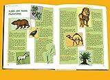 Die große Kinder-Bibel: Menschen, Geschichten und Lebenswelten des Alten und Neuen Testaments - 4