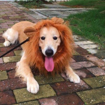 icase4u Peluca graciosa de león Melena para Perro Mediano Grande Mascota Cosplay Juguete ara Navidad Fiesta Lion Mane for Dog (Marrón Ligero con Orejas)