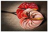 Wallario Herdabdeckplatte/Spritzschutz aus Glas, 2-teilig, 80x52cm, für Ceran- und Induktionsherde, Motiv Blüten Einer Flamingoblume - Anthurie - auf Schwarzem Marmor