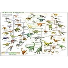Dinosaurio evolución Póster educativo raras New 24x 36