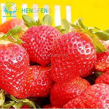 2015 Hot vente 300 pièces / sac Livraison gratuite Bonsai Organic Fruit Escalade Graines Rouge Fraise Pour bricolage jardin