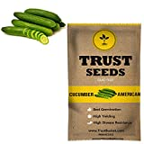 #10: TrustBasket Cucumber american black Vegetable Seeds (GMO Free)