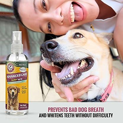 The Company of Animals ARM & HAMMER Dental Spray Clear 2