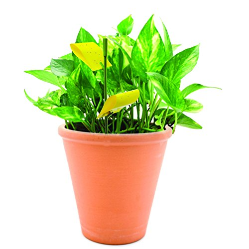 Safer Brand 5025 Houseplant Sticky Stakes Insect Trap, 7 Traps Size: QTY 7 Outdoor, Home, Garden, Supply, Maintenance