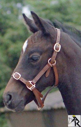 Reitsport Amesbichler Lederhalfter Pony Pony Lederhalfter braun
