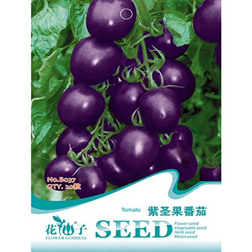 calli-20pcs-semillas-parpura-tomate-cherry-planta-vegetal-fruta-organica