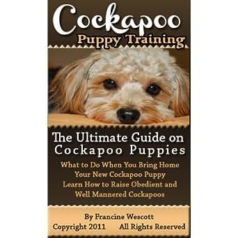 how do you get a guide dog