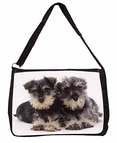 Miniature Schnauzer Dogs Large 16