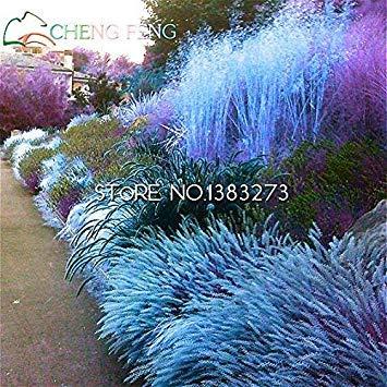Semi di erba perenni 100 semi giardino ornamentale facile crescere piante da seme tohum vaso bonsai jardin decorazione giappone camera fiori