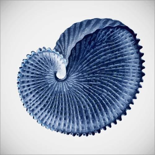 Poster 60 x 60 cm: Seashell von Mandy Reinmuth - hochwertiger Kunstdruck, neues Kunstposter -