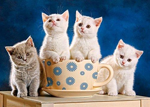 Puzzle 500 Teile - Kätzchen / Katze - suchen Milch - Haustiere Katzenpuzzle Tiere - Haustier auf dem Tisch - Katzen
