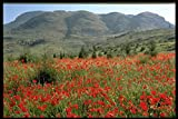 547042 Poppies Near Antalya Turkey A4 Photo Poster Print