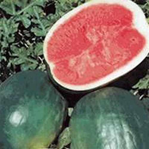 SEED Watermelon, BLACK DIAMOND, HEIRLOOM, BIO 100 graines, NON OGM, MELON