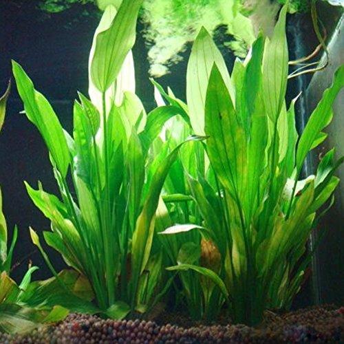 Logres Fisch Tank Aquarium Decor Grün Künstliche Kunststoff Wasser Gras Pflanze Ornament