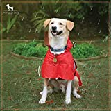 Heads Up For Tails- Pawring Dog Raincoat with Hood, Raincoat for Dogs