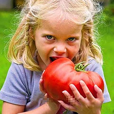 100 seeds/pack Bonsai Tomato seeds Mini Cherry Potted Sweet Fruit Vegetable Organic Fresh
