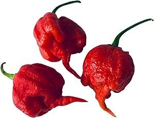 Frische *Carolina Reaper Chilis * 100 gramm *Weltrekord*