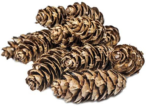 Feuerzündis 1 kg Douglasienzapfen Grill-Anzünder naürliche Premium Anzünder für Grill Kamin oder Ofen duftend Naturprodukt aus Zapfen und Wachs lange Brenndauer Kaminanzünder ca.120 Zapfen