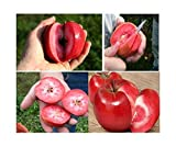 3x Redlove Apfel Samen Garten Baum Pflanze Obst Essbar Rot #328