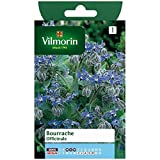 Vilmorin - Sachet graines Bourrache Officinale