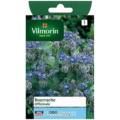 Vilmorin - Sachet graines Bourrache Officinale