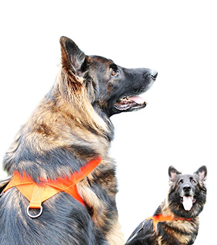 Dog-Security-Harness-for-Tracking-Hunting-Exercising-50-cm-Handmade-in-Sweden