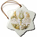 3dRose orn_80725_1 Picture of 1800 Drawing of Famous Biologist Squids Snowflake Porcelain Ornament, 3-Inch