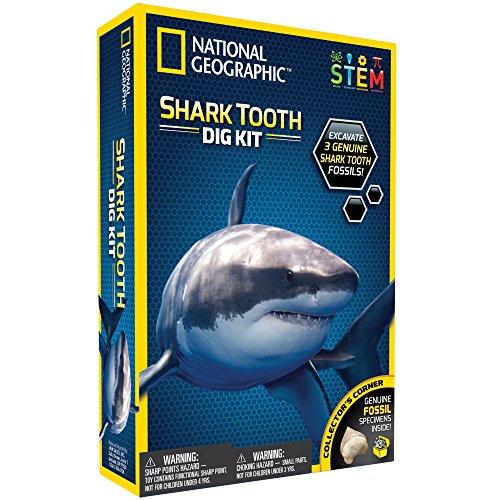 Haifischzahn Ausgrabungsset – Von National Geographic