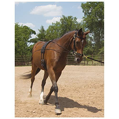 Southwestern Equine Balance Trainingssystem, Balance System, Horse -