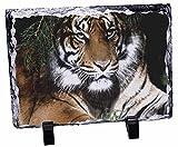Bengalischer Tiger Foto Sonnenschirm, Slate Rock