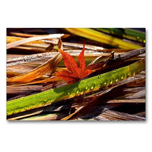 Calvendo Premium Textil-Leinwand 90 cm x 60 cm quer Ahornblatt mit Tropfen-Gras | Wandbild, Bild auf Keilrahmen, Fertigbild auf echter Leinwand, Leinwanddruck