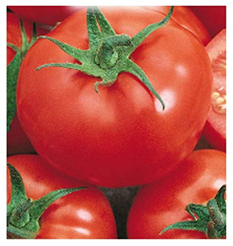 700 aprox - Tomatensamen Saint-Pierre - Lycopersicum Esculenthum In Originalverpackung Hergestellt in Italien - Tomaten