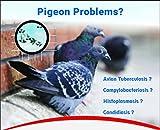 #3: SpikeZone - Spikes For Bird & Pigeons With Plastic Anchors (Pvc Gitti), Screws (10 Pcs. Pack)