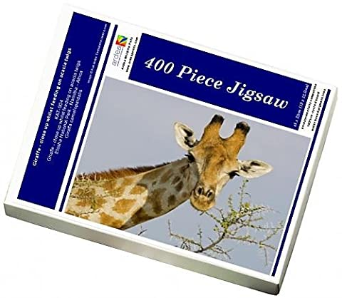 Photo Jigsaw Puzzle of Giraffe - close up whilst feeding on acacia twigs