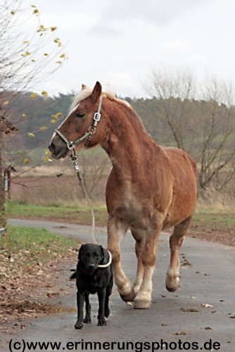 Grundausbildung des Pferdes - Führen - Co Halfter