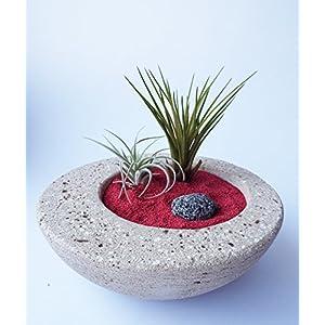 2 Tillandsien Set Im Stein Blumentopf   Handgefertigt Deko Zen Garten   Luftpflanzen Tischdeko   Pflanzen Deko   Blumentopf Naturmaterial