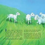 Joschi, das kleine Lamm - 2