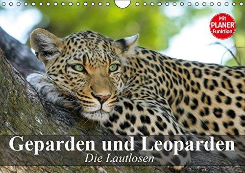 Die Lautlosen. Geparden und Leoparden (Wandkalender 2019 DIN A4 quer): Schönheit, Kraft und Ästhetik in perfekter Harmonie (Geburtstagskalender, 14 Seiten ) (CALVENDO Tiere)