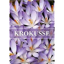 KROKUSSE (Wandkalender 2018 DIN A2 hoch): Der Frühling beginnt mit diesen kleinen, leuchtenden Blumen (Monatskalender, 14 Seiten ) (CALVENDO Natur)