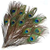 20 Piezas de Plumas de Pavo Real Adornadas para Hogar Joyas Ropas Sombreros
