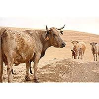"""Fotografía de autor para decorar:""""Vacas mironas"""". Tamaño y soporte a seleccionar"""